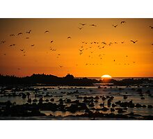 Sunset at Dyer Island Photographic Print