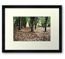 Hawthorn Woodland, Hagley, Tasmania Framed Print
