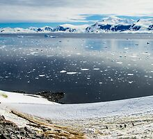 Stepping Onto the 7th Continent - Antarctica by DestnUnknown