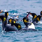 King Penguin Aquatics - South Georgia by DestnUnknown