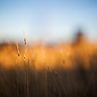 grass in the sun by James Calvey