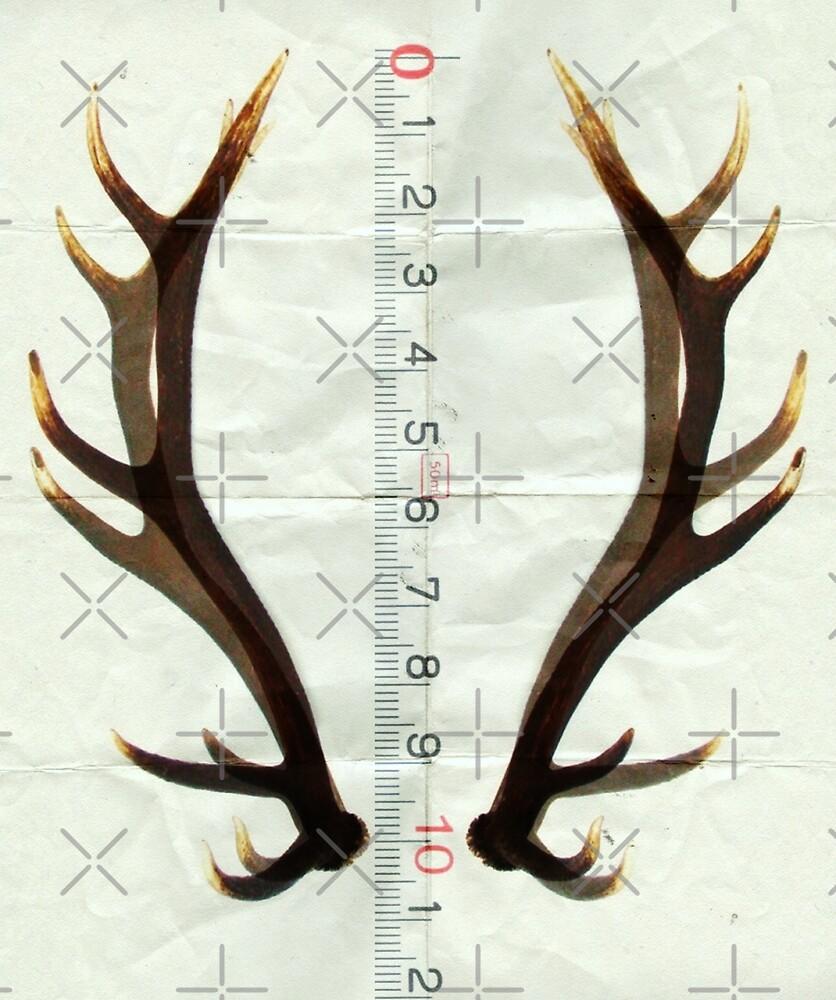 antlers measure by Vin  Zzep