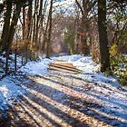 snowy path by James Calvey