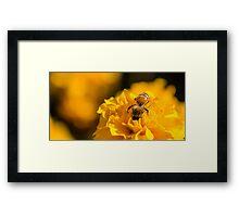 Head First Bee Framed Print