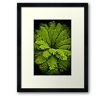 Large Green Fern Framed Print