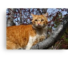 Just hanging out in the tree Canvas Print