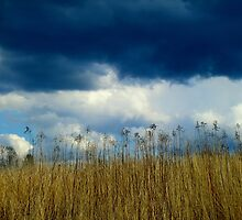 Spring Storm is Brewing by Kathleen M. Daley