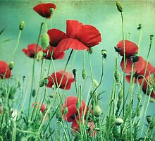 poppys by passerby2