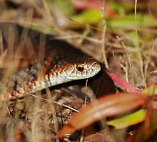 Snake In The Grass by CBoyle