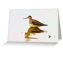 Wading Greeting Card