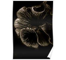 Viola in dark chocolate Poster