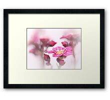 Sweet as candy too... Framed Print