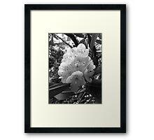 Mountain Laurel Monotone Framed Print