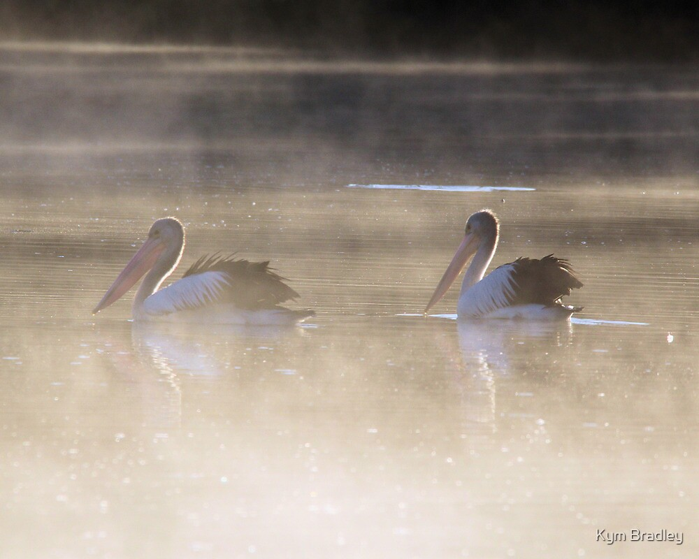 Fishing in the morning Fog  Pelicans  Canberra Australia  by Kym Bradley