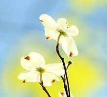 How Wonderful To See The New Colors Of SPRINGTIME!!!! by NatureGreeting Cards ©ccwri