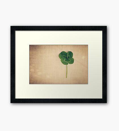four leaf clover 2 Framed Print