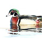 Watercolour Wood Duck by Jim Cumming