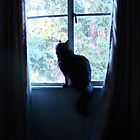Kitty in a Window by tiffsho