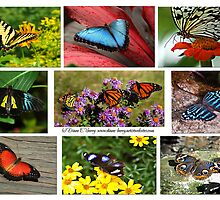 The Glory of Butterflies 3 by Diane E. Berry