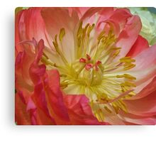 A Symbol of Peace, Love & Boston Strong. Canvas Print