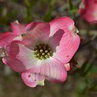 Flower from Dogwood Tree by JMG1883
