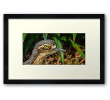 Stone-curlew Framed Print