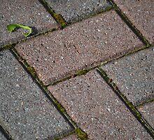 Patio Bricks by JMG1883