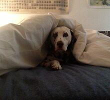 Smokey under comforter by Kiele