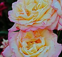 Peaches 'n' Cream by ACampbell