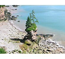 Solitary Standing Tree Photographic Print