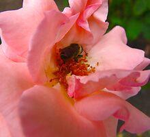 Peach nibble by MarianBendeth
