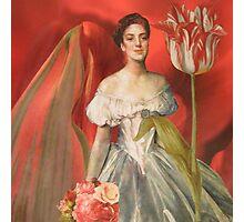 The Elegantly Fringed Tulip Photographic Print