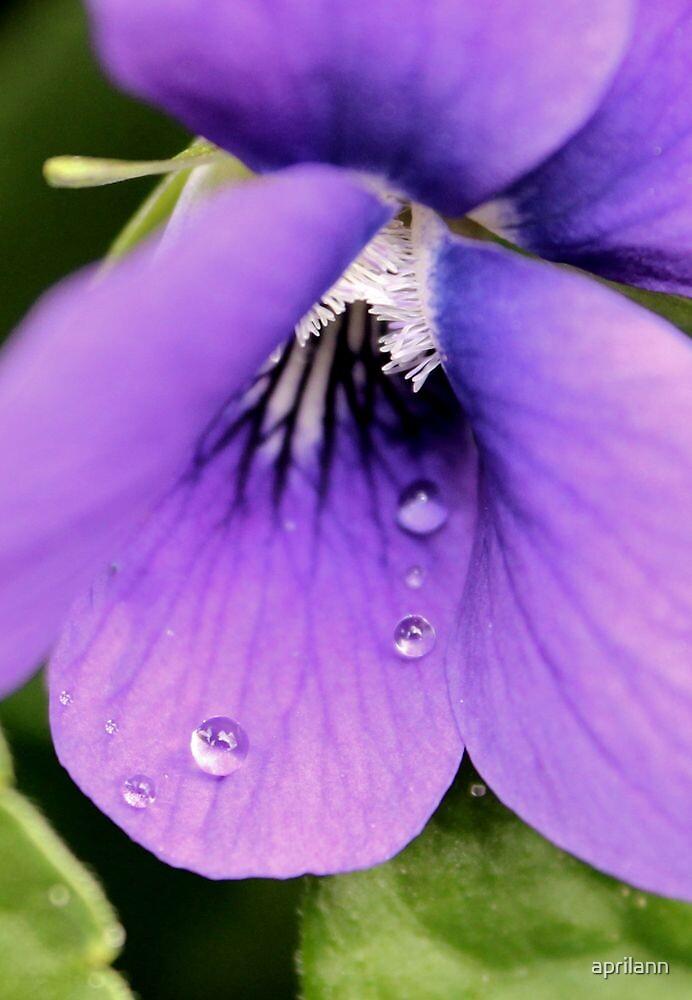 Violet Raindrops by aprilann