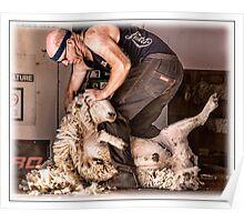 Sheep shearing Poster