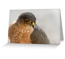 Where Did All Those Little Birds Go???? Greeting Card