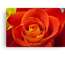 Deep Red Rose Canvas Print