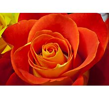 Deep Red Rose Photographic Print