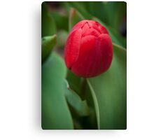 Deep Red Tulip Canvas Print