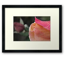 They Rose Together Framed Print
