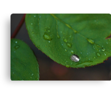 Empty Droplet Canvas Print
