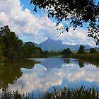 Mount Warning NSW by sarcalder