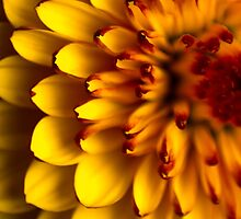 Flower studies by laurabaay