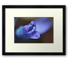 Indigo flower macro Framed Print