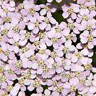 Mini petals by MEParnell