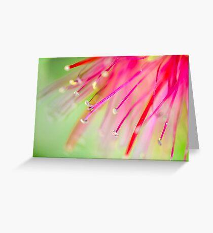 Bottlebrush Greeting Card