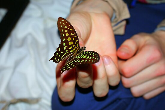 Wings in your palms. by xenxen