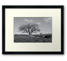 Wind blown tree, Penguin, Tasmania Framed Print