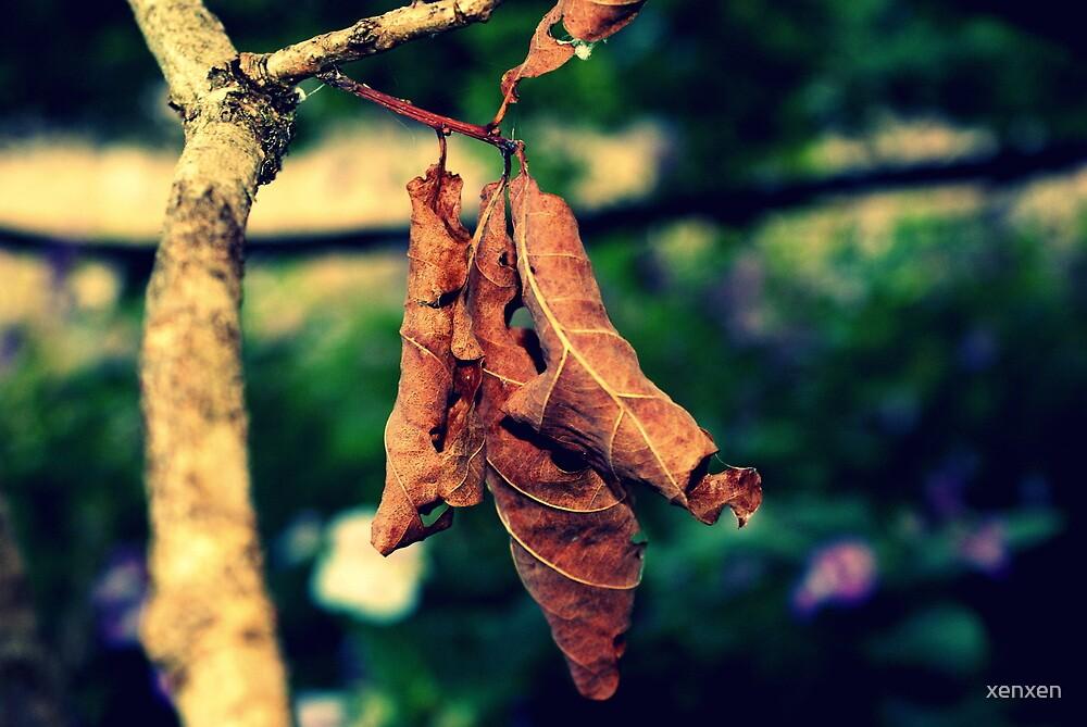 Autumn, hello.  by xenxen