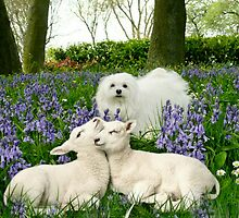 Snowdrop & Bluebells with Spring Lambs. by Morag Bates