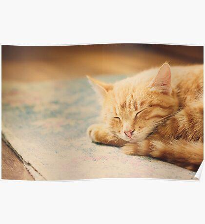 Little Red Kitten Sleeping On Bed Poster